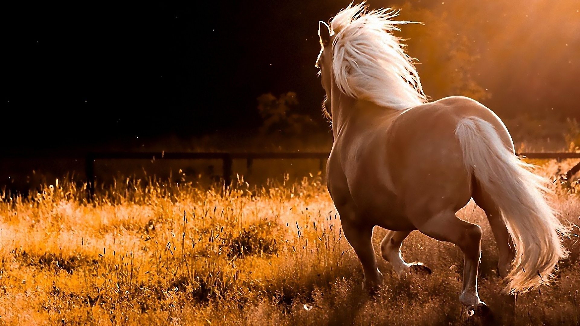 beautiful-horses-11
